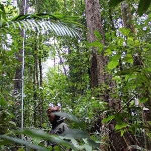 Field Work - Borneo