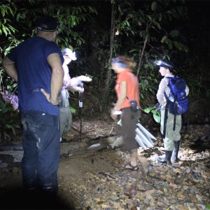 Field Work - Borneo